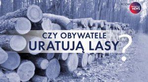 """ściete drzewa w lesie. Na zdjęciu napis """"Czy obywatele uratują lasy"""""""