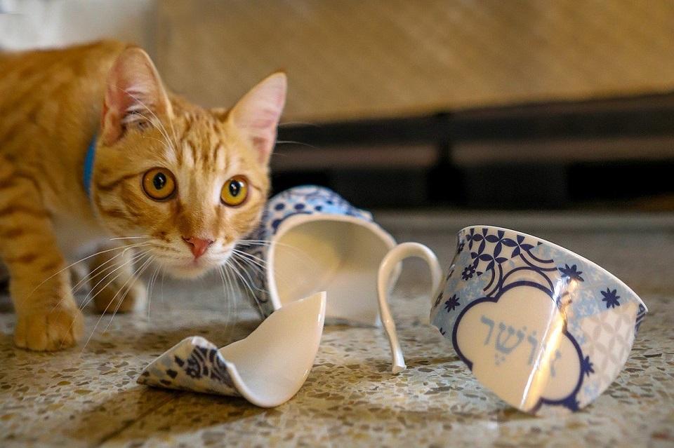 Na stole lezy zbita filiżanka, obok skrada się kot
